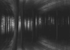 Forest upside down.JPG
