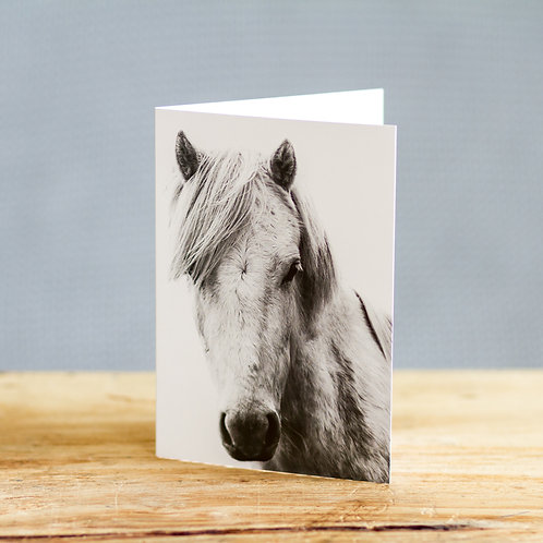 Harry Horse - card