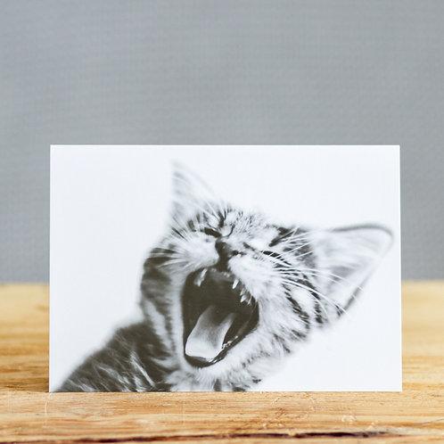 Kurt kitten - card