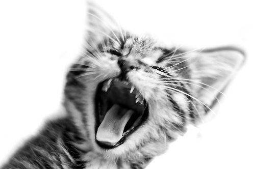Kurt Kitten