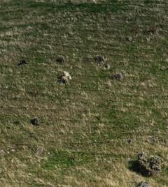 802_NZ North Island sheepdog trials_437.