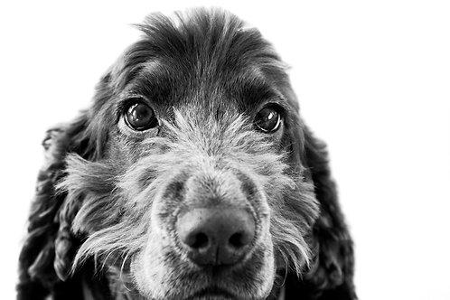 Daphne Dog