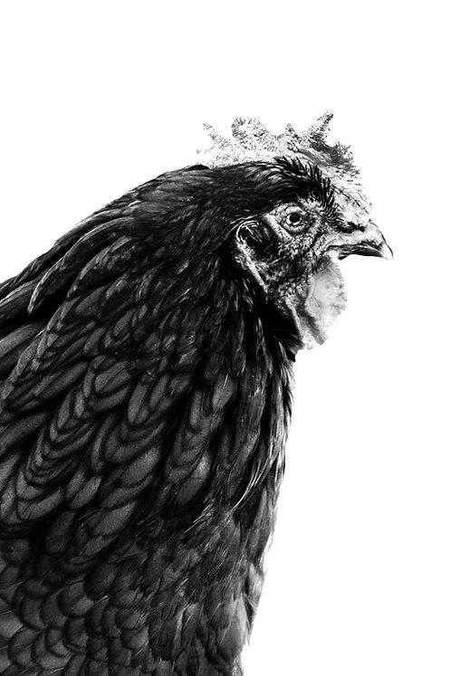 Cheryl Chicken