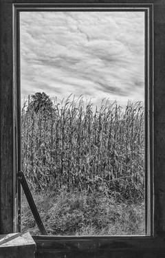 776_Inside looking out_452.JPG