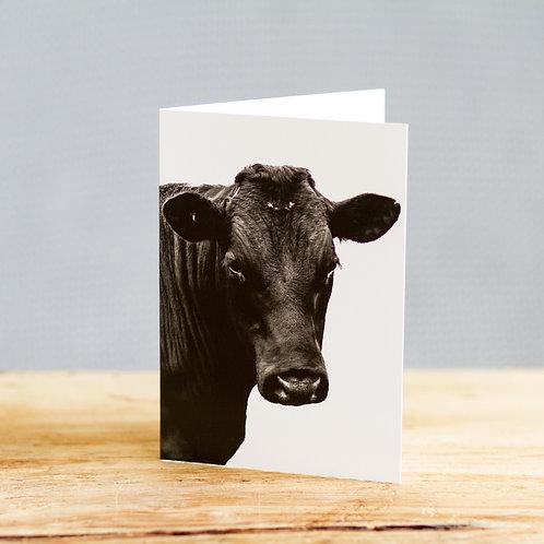 Bertie bull - card
