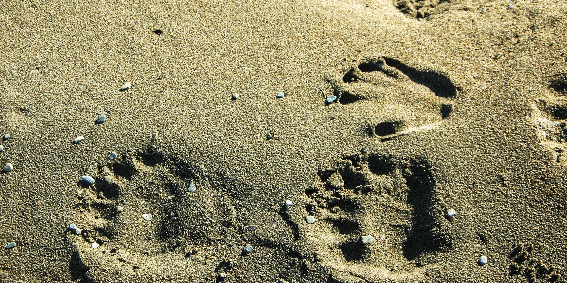 Where do the footprints of the polar bear take us..?