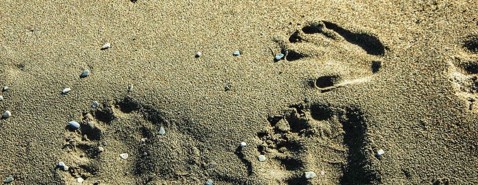 Where do the footprints of the polar bear take us..?