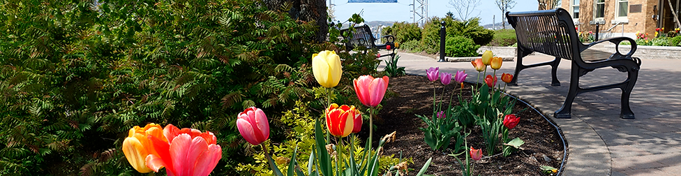 PB-WaterFrontTulips-Cropped.png