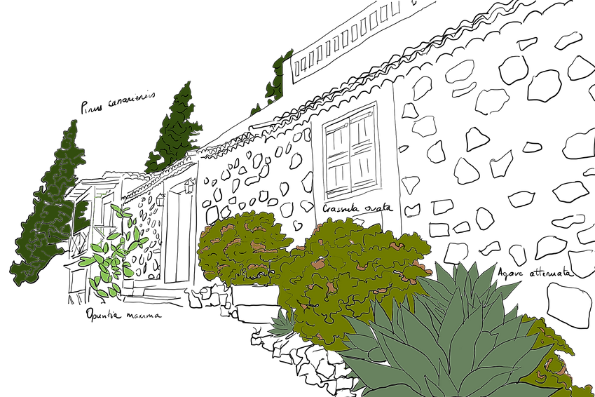 plantesgomera.png
