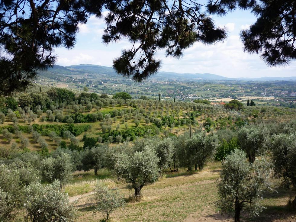 Gamberaia - Vue sur les champs d'oliviers - 06/2011