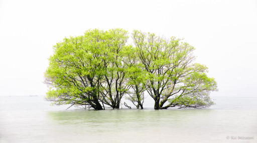 琵琶湖水面木.20190817.2048px.jpg