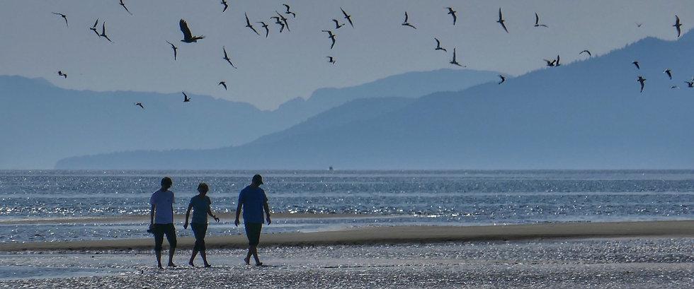 Alaska by Sea Birds on Beach.JPG