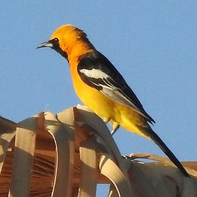 California Desert Bird.jpg