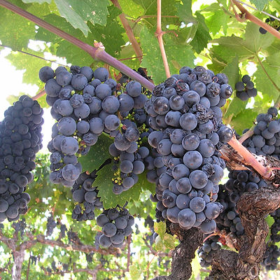 California Coast Grapes.jpg