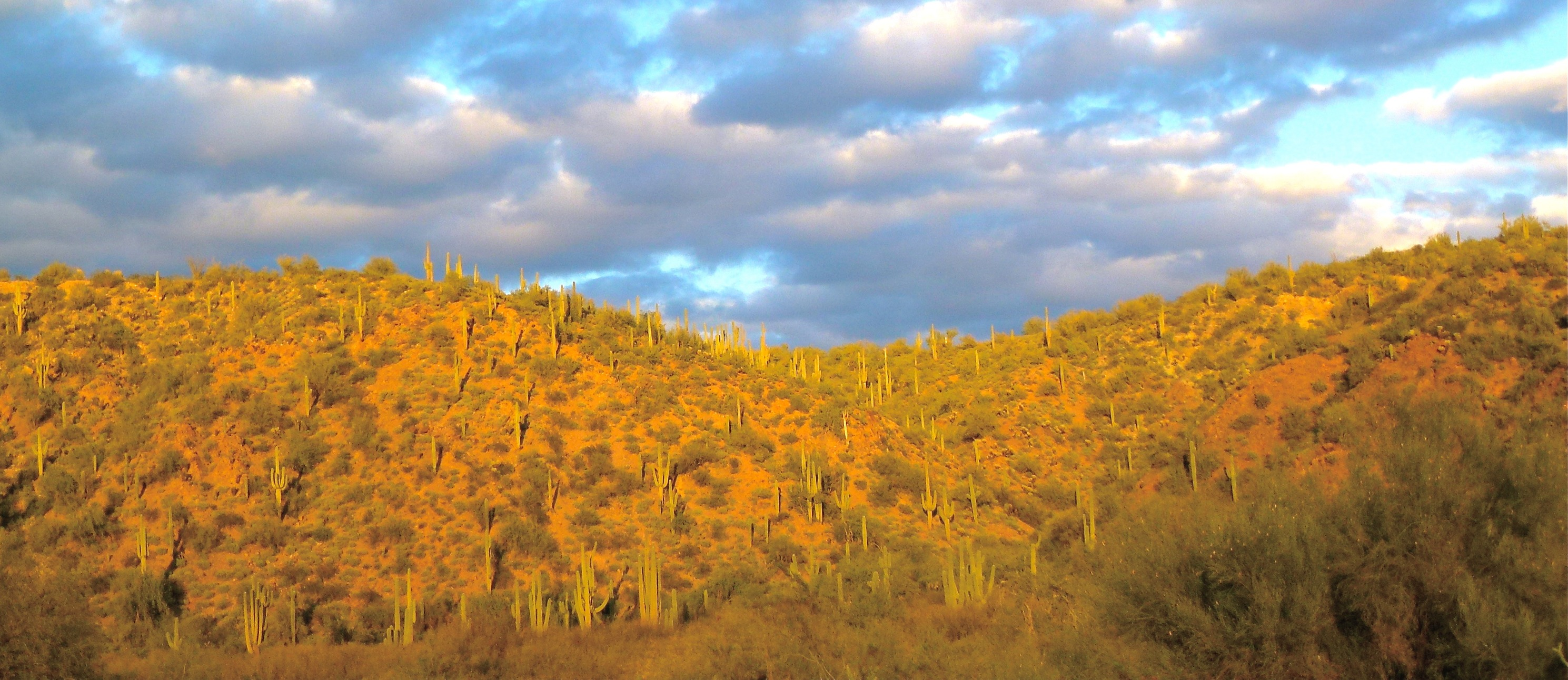 Roadrunner Expeditions Home Page Sonoran