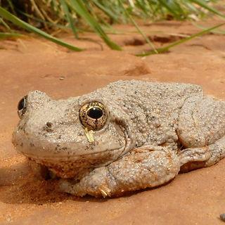 Sedona Toad.jpg