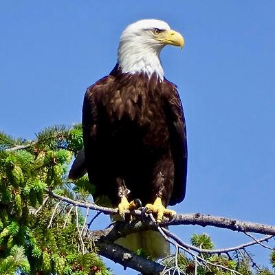 Alaska by Sea Eagle by Peter Scholten un