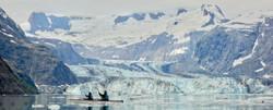 Alaska by Sea Kayak with Glacier.jpg