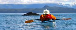Alaska by Sea Humpback with Kayak.jpg