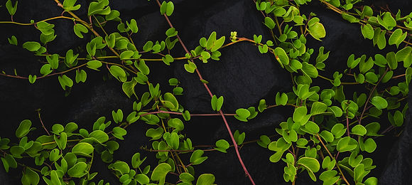 Plant Background DarkResized.jpg