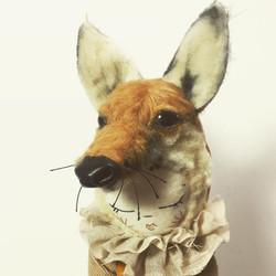fox with socks