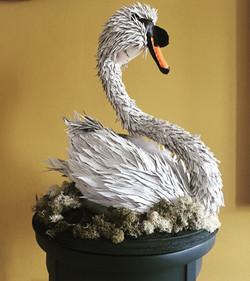 Swan 2017