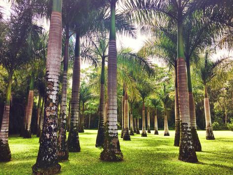 Hawaii: A Pacific Island Kind of Love part: 1