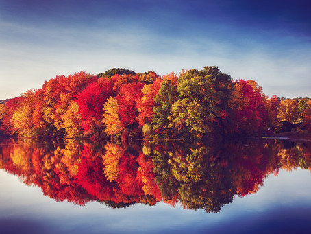 Fall Colors from the Comfort of Your Car