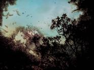 Tree Silhouettes  Across The Fields