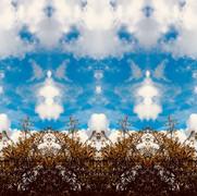 Clouds/Echos/Treetops
