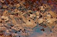 Autumn Reflections  On Lick Creek