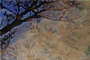 Riverside Tree Reflections