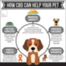 How CBD can help your pet