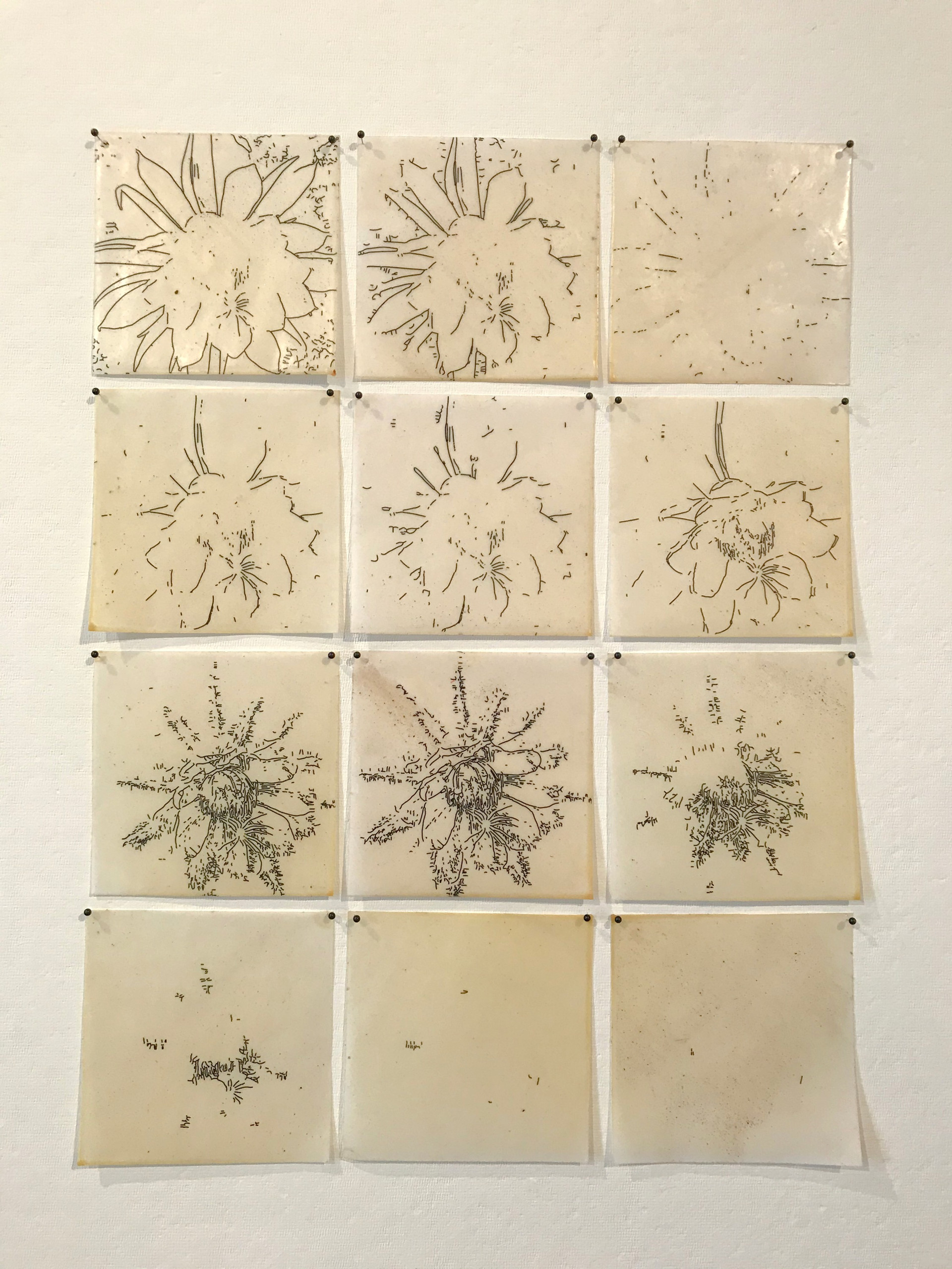 Threshold Drawings: Night Blooming Cereus