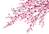 f4d%20blossom%20tree_edited.png