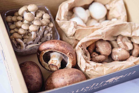10 good things to know about mushrooms