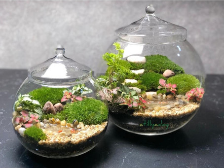How to choose your first terrarium