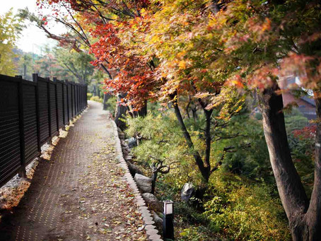 Autumn in Seoul through the eyes of a chef