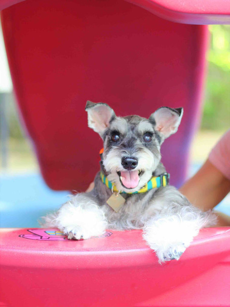 Want to help rescue dogs? Read about this adorable therapy dog today