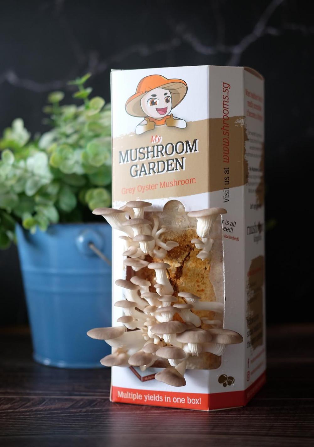 Mushroom Grow Kit