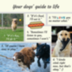 Your dogs' guide to life