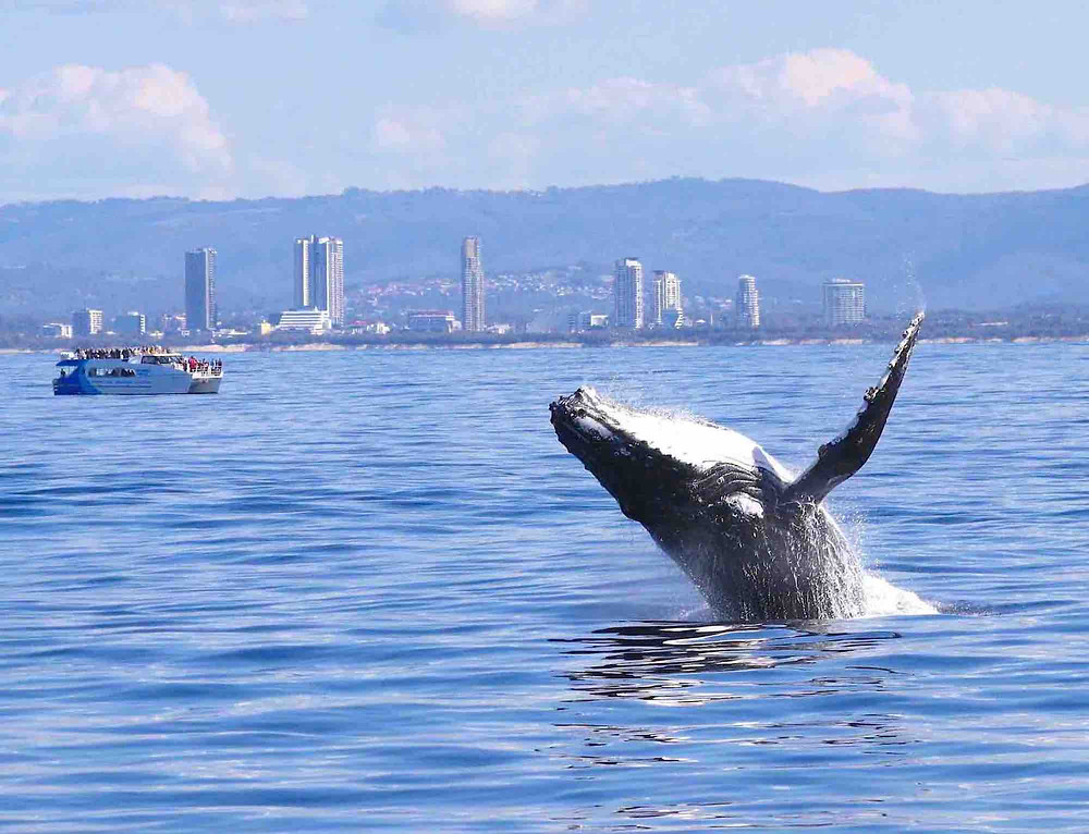 Humpbacks & High-Rises
