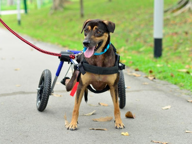 Stories of hope from a dog rescue volunteer