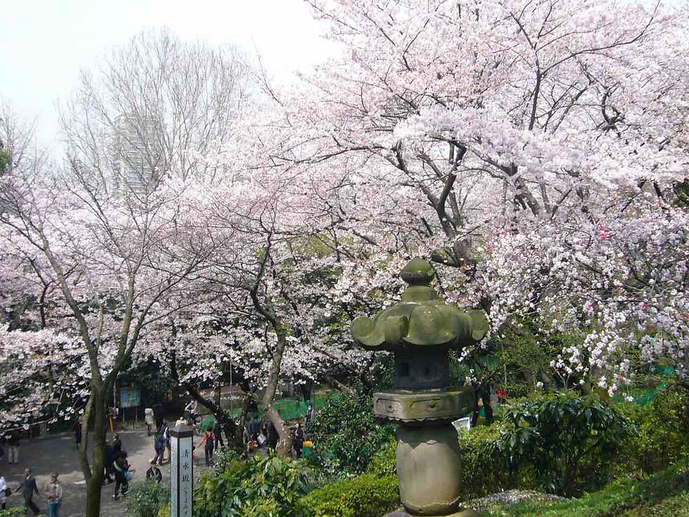 Ueno Park cherry blossoms © TCVB