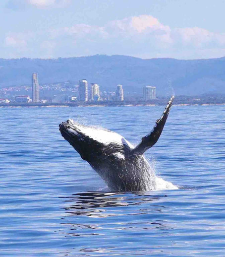 7 things to love about humpback whales