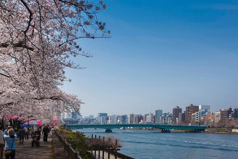 Sumida Park, Sumidagawa River (© TCVB)