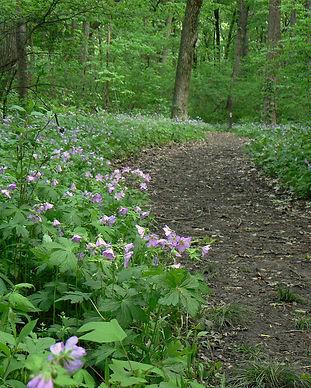 woodland garden.jpg