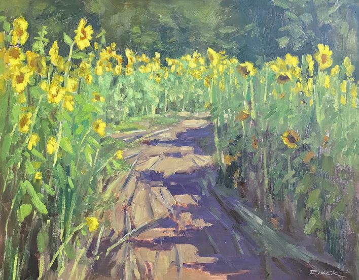 Sunshine Pathway by Julie Riker