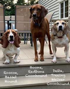 Three Dogs WLTDO4Y.jfif
