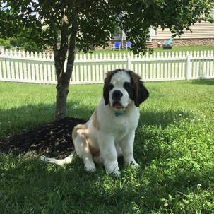 Dog in Yard.jpg